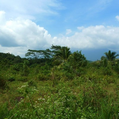 Land for sale at Balangoda Profile Picture