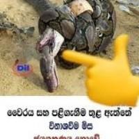 Kumara Ravindra Profile Picture