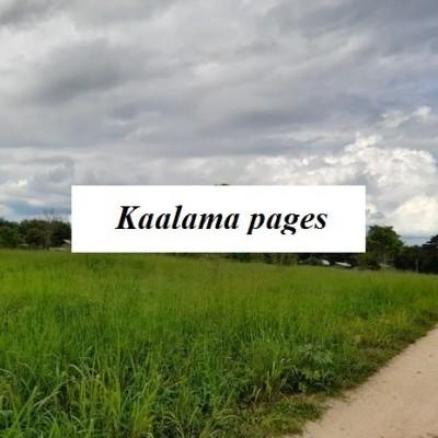 Land for Sale in Buttala Profile Picture