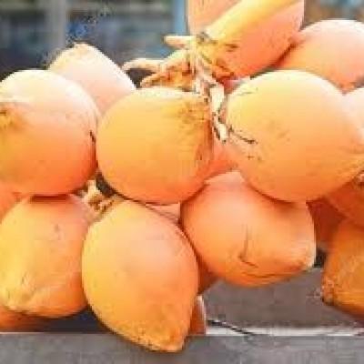 King Coconut Wholesale  (තැඹිලි තොග ) Profile Picture