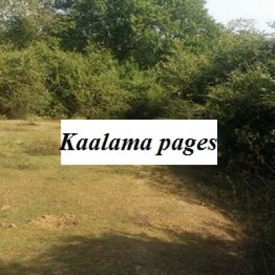 Land for Sale in Tangalle Profile Picture