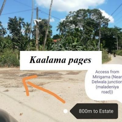 Coconut Estate - Mirigama Profile Picture