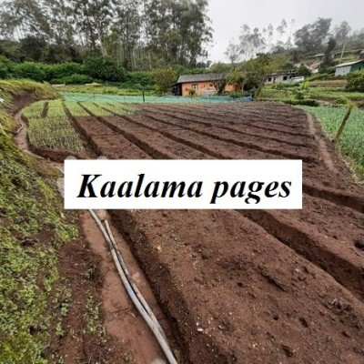 Land for Sale in Nuwara Eliya Profile Picture
