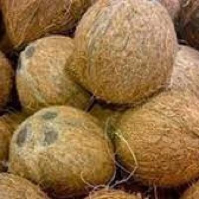 Coconut Wholesale  (පොල්තොග) Profile Picture