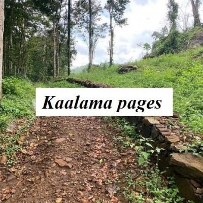 Tea and Coconut Estate - Welipanna Profile Picture