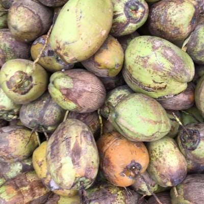Coconut Wholesale (පොල් තොග) Profile Picture