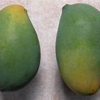 KC Mango Wholesale (කරතකොරොම්බ් අඹ තොග) Profile Picture