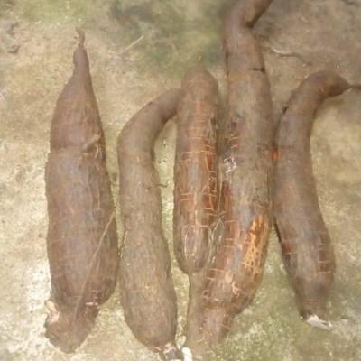 Manioc Wholesale(මඤ්ඤොක්කා තොග) Profile Picture