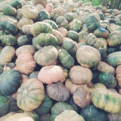 Pumpking Wholesale (වට්ටක්කා තොග) Profile Picture