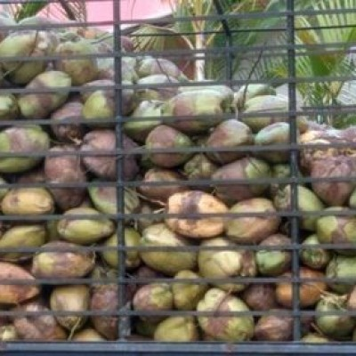 Coconut Wholesale (Pol, පොල් තොග) Profile Picture