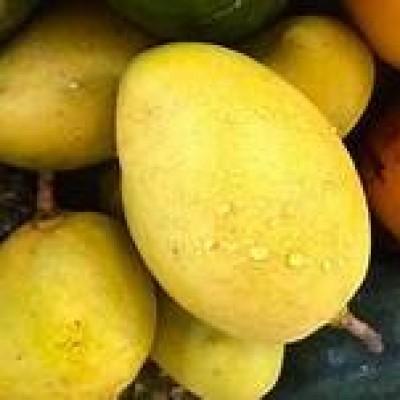 TJc Mango Wholesale ( අඹ තොග) Profile Picture