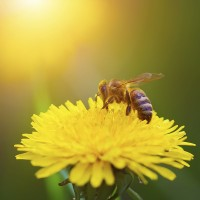 Bee Control Adelaide Profile Picture