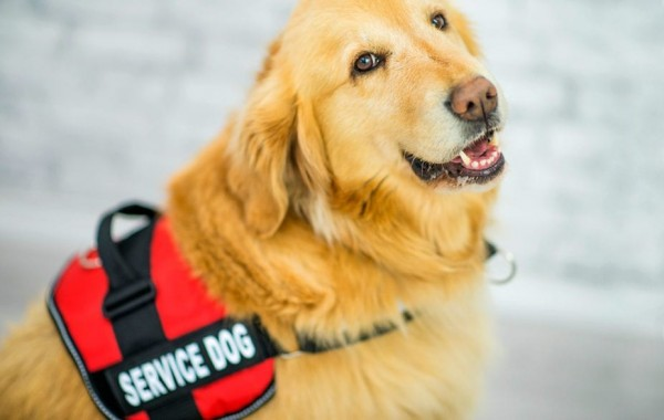 Understanding the Basics of Emotional Support Animals - 2021 Guide